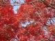 행주산성 가을풍경 #2